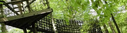 adventureworks nashville west old forest adventure park in