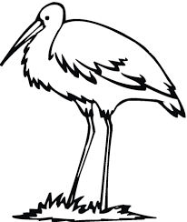 egret bird coloring free printable coloring pages