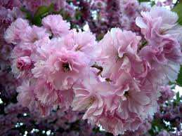 blossoms ferrebeekeeper