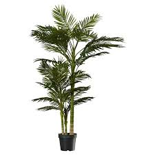 brookings palm tree in pot reviews joss