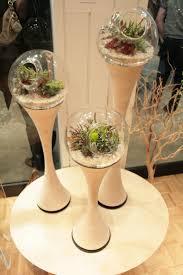 73 best terrarium images on pinterest terrarium ideas gardening
