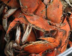 terry mcauliffe says all maryland crabs are born in virginia