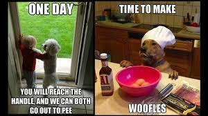 Cute Dog Memes - let these super cute dog memes brighten your ruff day dogs