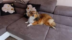 comment empecher mon chien de monter sur le canapé mon chien est il bien ou mal éduqué eduquer chien