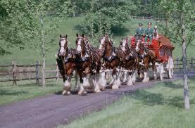 Budweiser Clydesdale Barn Expert Equestrian Articles Dream Jobs Handling The Budweiser