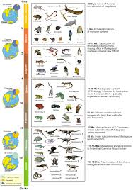 list of australian native plants fauna of madagascar wikipedia