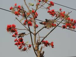 today u0027s flowers two for joy on the indian coral tree terra farmer