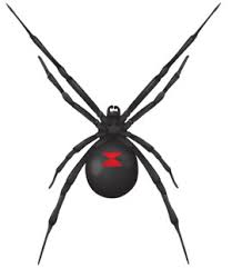 Black Widow Spiders Had A - common household pests in georgia spiders black widow spiders