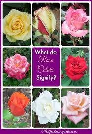 Different Color Roses Rose Colors What Do They Signify To The Recipient Rose
