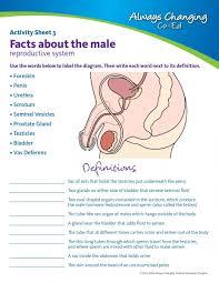 Human Anatomy Worksheet Male Reproductive System Labeling Worksheet Reproductive System