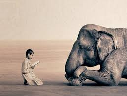 the mindset of an elephant inspire others inspirational