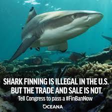 the case for shark fin trade bans u2013 mission blue