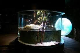 crab decorations for home fiddler crab u0026 four eyed fish tank vivarium aquarium