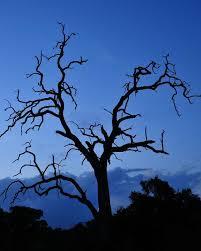 in a dead tree shutterbug