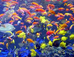 calendar of events long island aquariumlong island aquarium