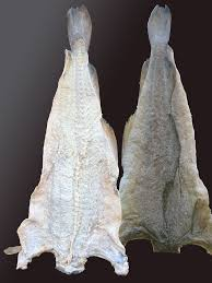 bacalhau wikipedia