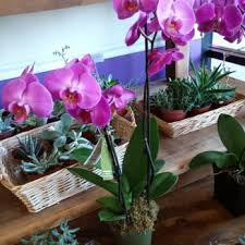 orchids for sale cactus flower florists 54 photos 30 reviews florists 2040