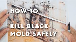how to kill black mold safely u0026 forever youtube