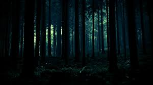 forest hd wallpaper tianyihengfeng free download high