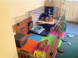 How To Build A Rabbit Hutch And Run Best 25 Wire Rabbit Cages Ideas On Pinterest Cages For Rabbits