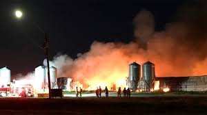 Barn Fires Hog Barn Fire Near New Bothwell Kills Thousands Of Pigs Ctv News