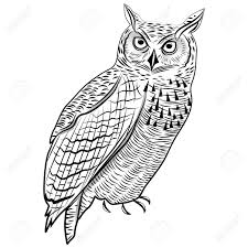 Halloween Owl Clip Art by Great Horned Owl Clipart Halloween Pencil And In Color Great