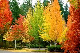 autumn trees introdekatelyn