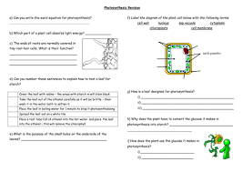 photosynthesis revision lesson by seasquirt teaching resources tes