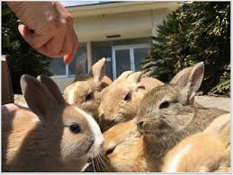 let u0027s go to paradise of rabbits