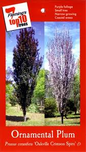 great tree range in perth cole s nursery