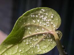 Types Of Plant Disease - garden diseases what killed it
