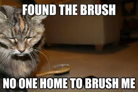 Cat Problems Meme - first world cat problems memes quickmeme