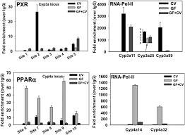 Regulation Of Hepatic Drug Metabolizing Enzymes In Germ Free Mice