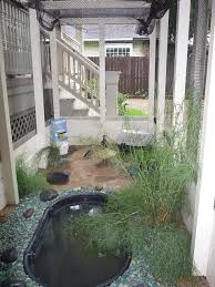 Backyard Duck Ponds Need Some Duck Pond Ideas Backyard Chickens
