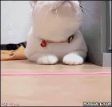 Dat Ass Cat Meme - dat ass cat by a jesters tears meme center