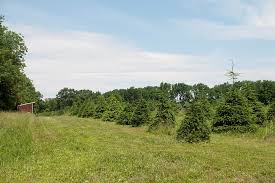 8 christmas tree farm homes for sale u2014 life at home u2014 trulia blog