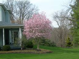 decorative trees for home ornamental trees for planting close to houses wearefound home design