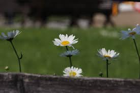 Blumen Bade Emoortionen Höfe