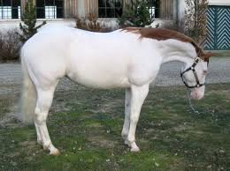 126 best interesting horse colors images on pinterest beautiful