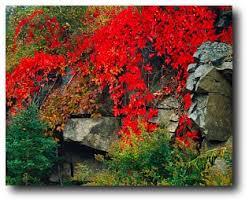fall foliage england maine fall foliage fall foliage tours