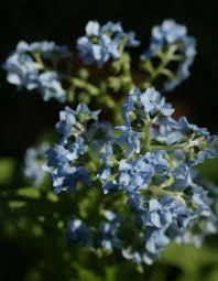 blue and white create calm in the winter garden san antonio