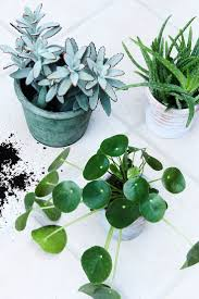 169 best house plants images on pinterest plants indoor plants