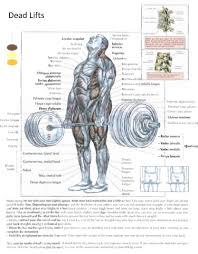 bench press science guy supplements