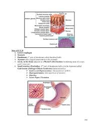 Esophagus And Stomach Anatomy Lecture 16 Esophagus And Stomach Disorders Pathology