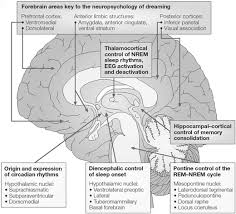 Anterior Association Area Sleep Anesthesiology And The Neurobiology Of Arousal State