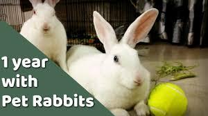 having pet rabbit india review youtube