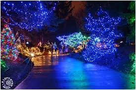 brookfield zoo winter lights festival of lights at brookfield zoo tinsel hunter grace