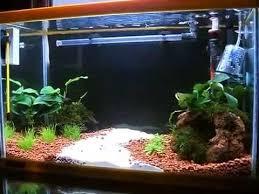 ghiaia per acquari acquario 22 litri 40cm avviato da 2 settimane