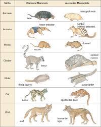 hsc biology syllabus dot point summary blueprint of life dux