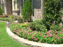 pentas flower flower plants trees green landscaping design lawn